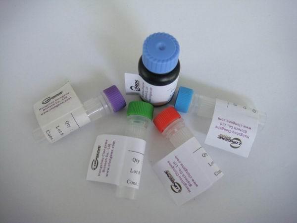 BY-1910R-TGF Beta R3荧光素FITC标记抗体,荧